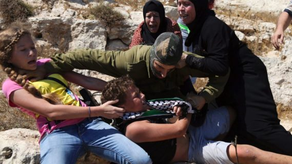La ténacité des Palestiniens est comparable à celle des oliviers séculaires qui, en Palestine, parviennent à refaire surface parmi les pins européens.