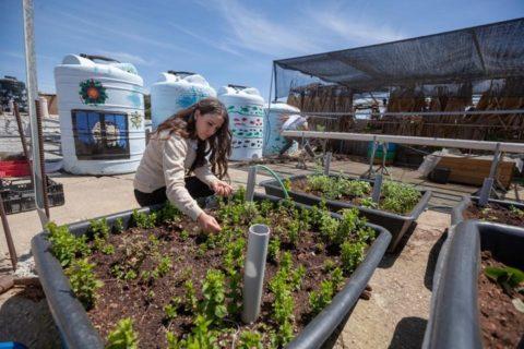 Shatha plante les semences pour les plantes de la famille