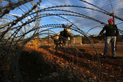 Souvent, les fermiers palestiniens trouvent difficilement accès, voire pas du tout, à leurs terres, en raison de l'empiètement et de l'expansion incessante des colonies illégales. (Photo : Shadi Jarar'ah APA images)