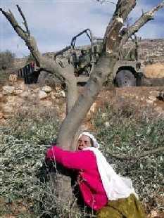 Mahfoutha Shtaya, 65 ans, qui « nous a inspirés en affrontant en 2004 les soldats et les colons israéliens au moment où ils ont déraciné des centaines d'oliviers – la principale source de revenu de sa communauté – dans son village. Seule et sans défense, elle s'est collée à l'un des rares arbres restés debout. Son action a témoigné avec vigueur contre ces destructions barbares et leurs effets désastreux sur une population déjà passablement touchée. »