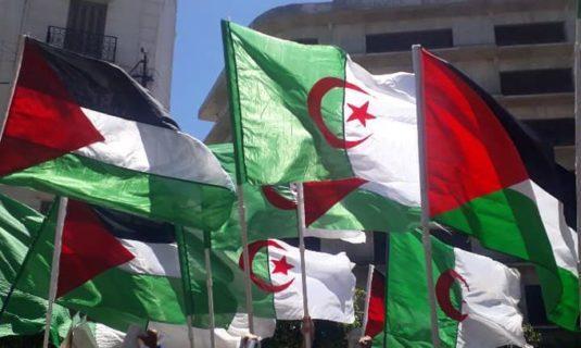 Drapeaux palestiniens et algériens unis : refus de reconnaître un Etat d'apartheid